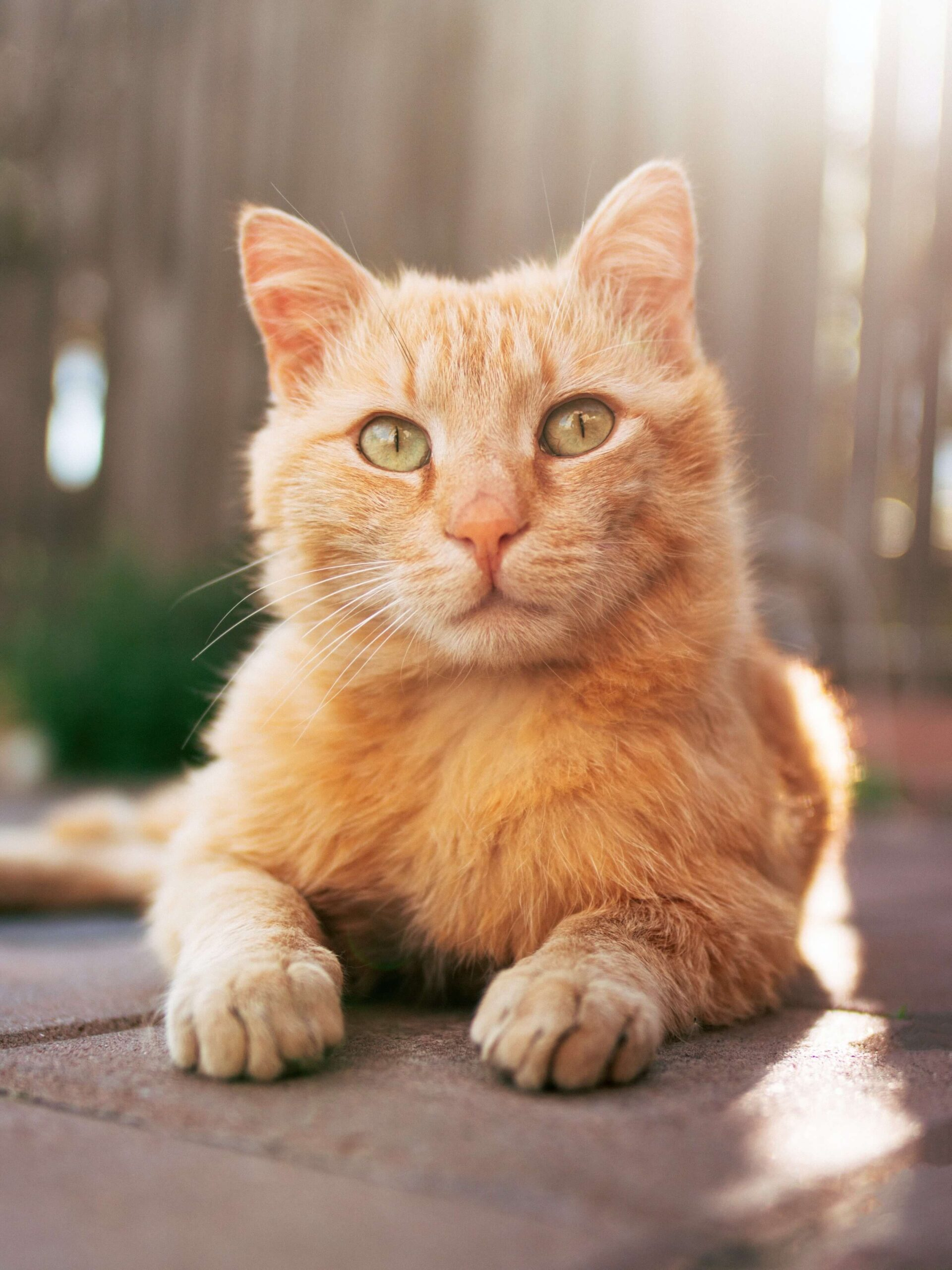 Kot probiotyk dla zwierząt OMNi-BiOTiC