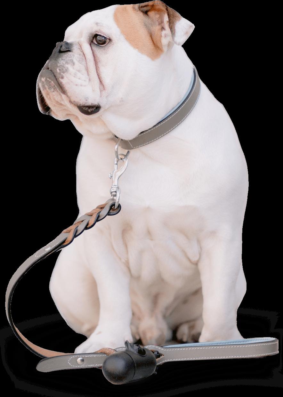 OMNi-BiOTiC Cat&Dog pies i kot